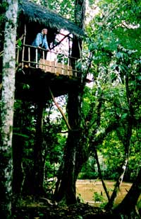 Edies tree house Posie Memorial
