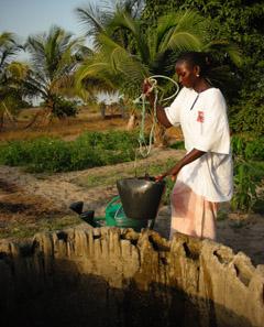 Senegal women collecting water